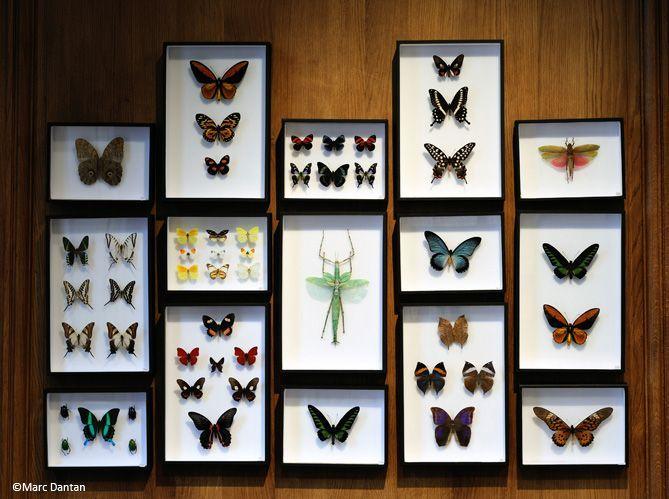 1. Décorez d'insectes (image_2)