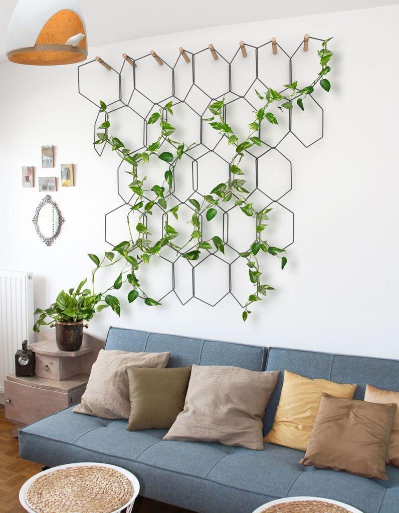 Plante Sur Les Murs plantes grimpantes : comment les entretenir ? - elle décoration