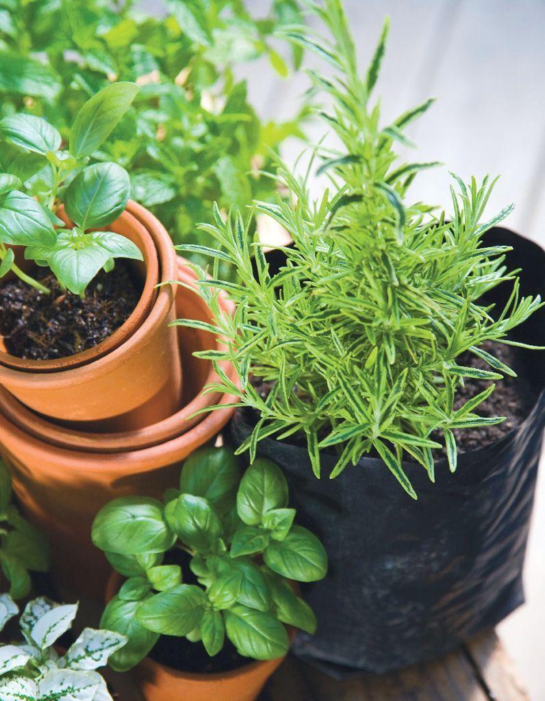 Plantes Aromatiques Sur Terrasse les astuces pour cultiver vos herbes aromatiques comme une