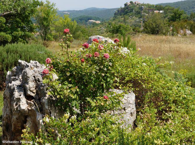 Jardiner sans pesticides, c'est possible (image_1)
