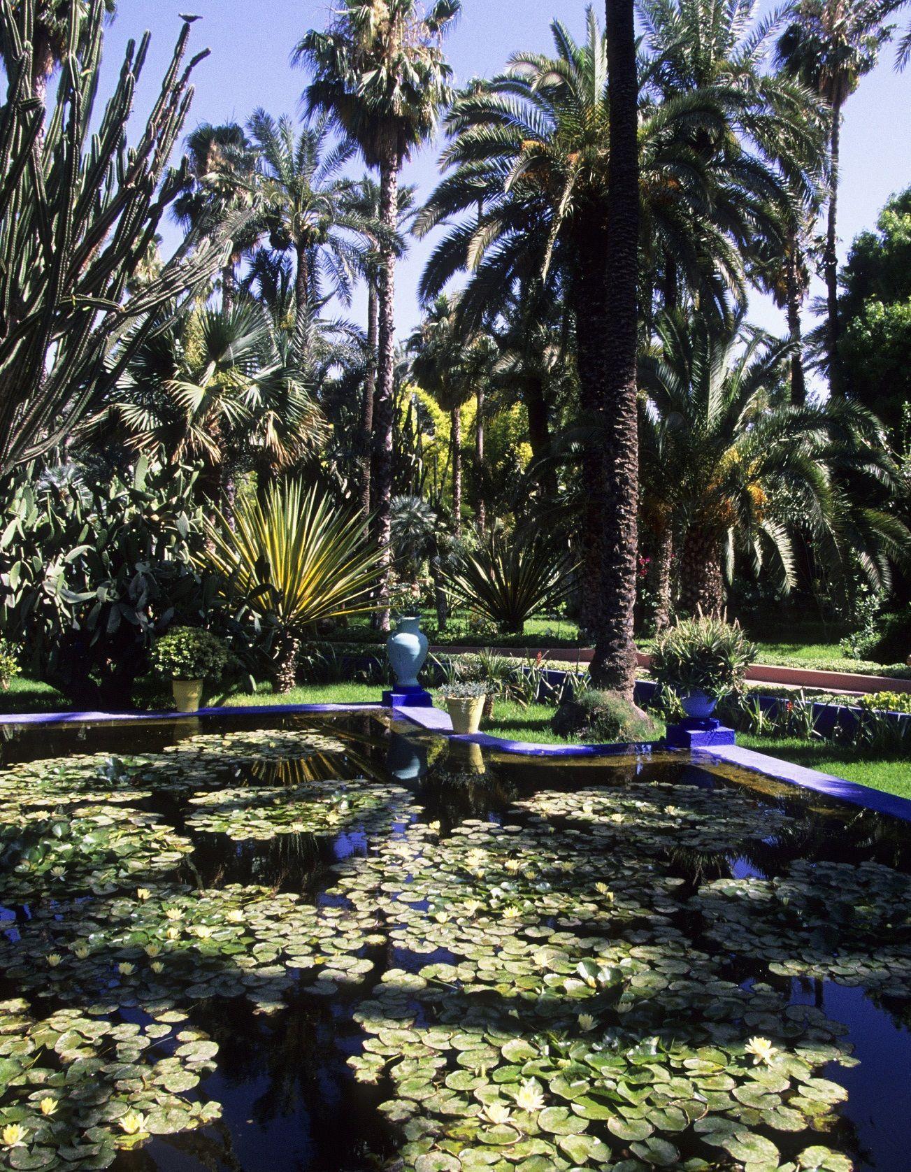 Le bassin du Jardin Majorelle