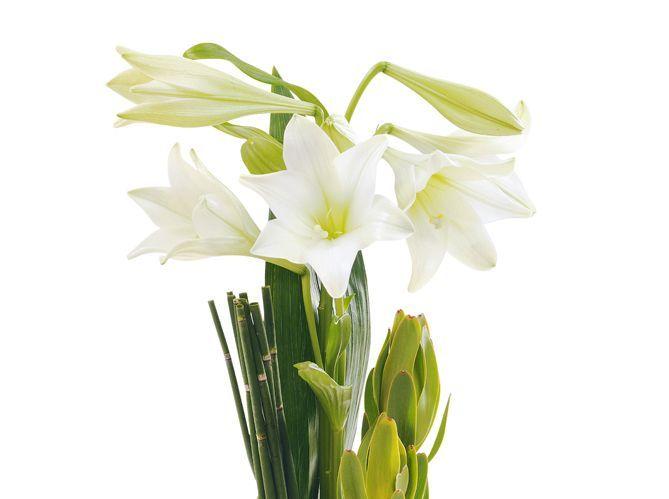 Le langage des fleurs : les grands classiques (image_2)