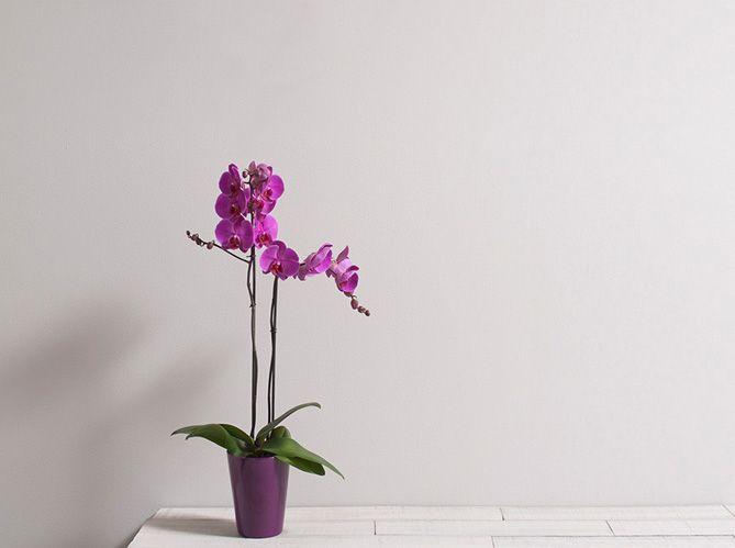 Le langage des fleurs : les grands classiques (image_4)