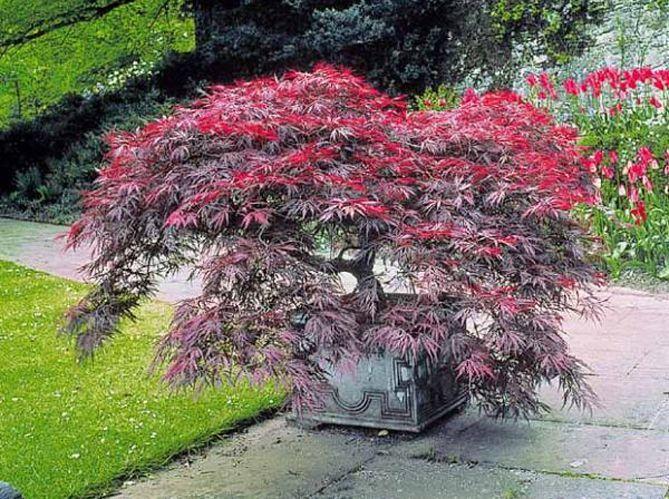 quel arbre de petite taille pour mon jardin elle d coration. Black Bedroom Furniture Sets. Home Design Ideas