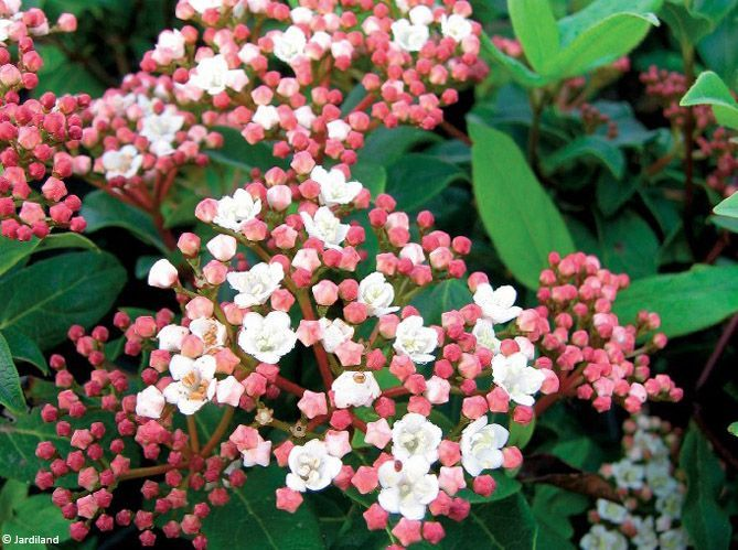 Les arbustes (image_2)