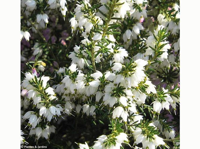Les fleurs (image_4)
