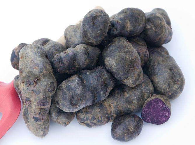 Les légumes racines: les ancêtres de la pomme de terre (image_2)