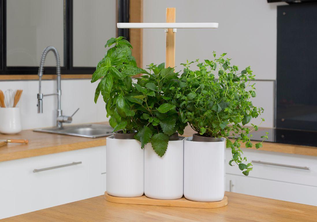 Les astuces pour cultiver vos herbes aromatiques comme une pro