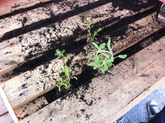 Planter (image_3)