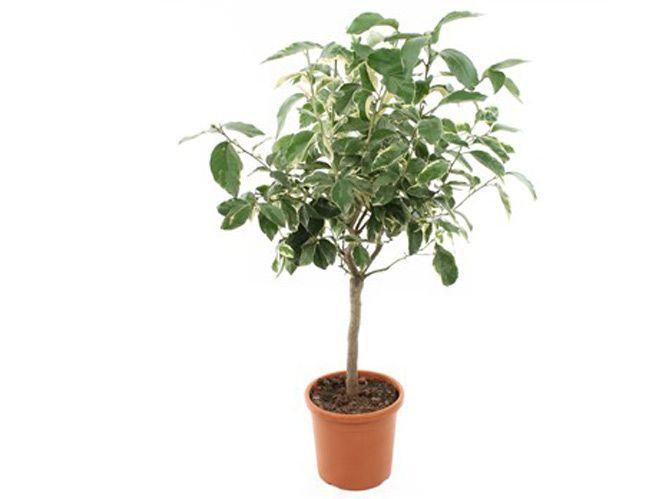 Planter les arbres fruitiers : le mode d'emploi (image_3)
