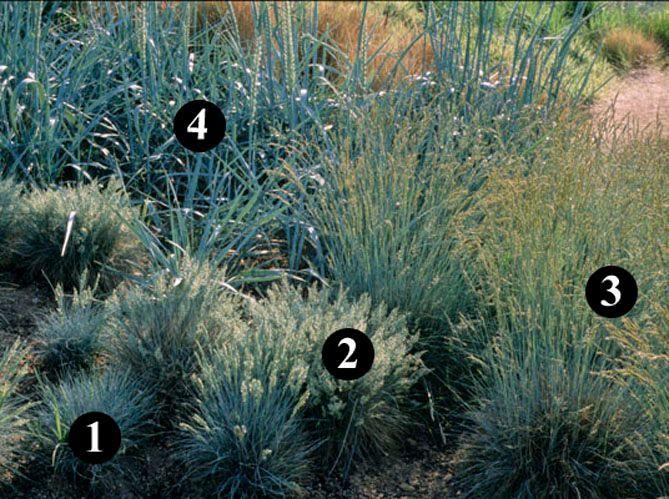 Un jardin sec désertique (image_2)