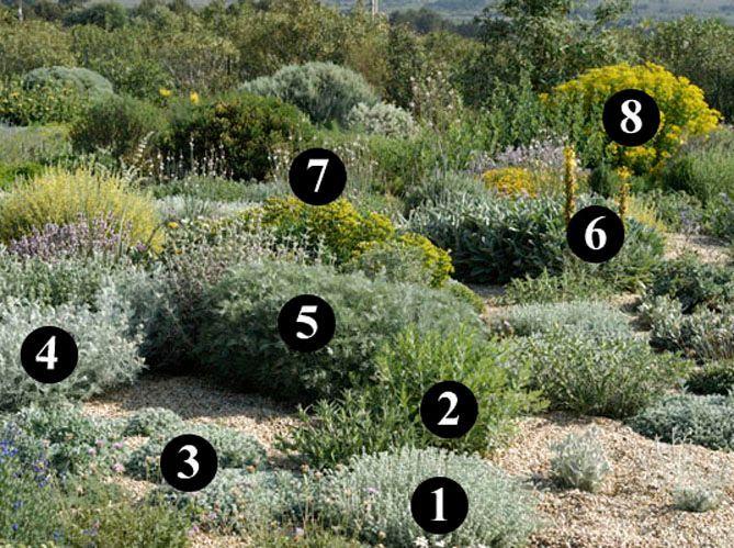 Un jardin sec désertique (image_3)