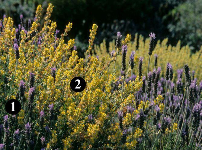 Un jardin sec fleuri (image_2)