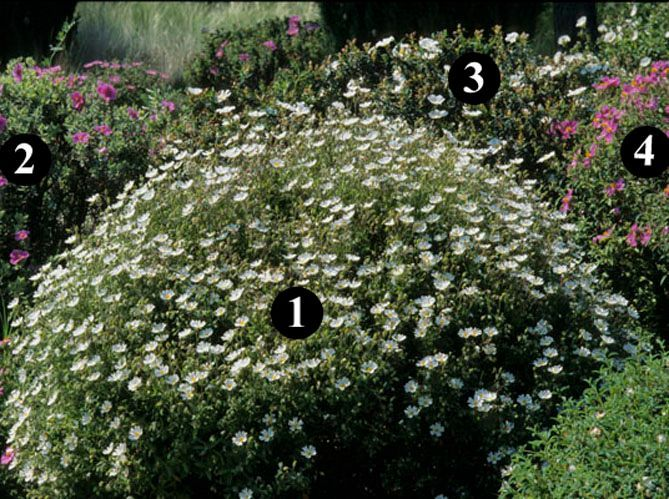 Un jardin sec fleuri (image_3)