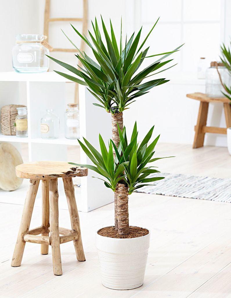 Plantes Depolluantes Les Cinq Plantes Depolluantes Les Plus Efficaces Elle Decoration