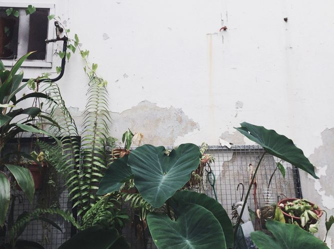 On crée une forêt tropicale à la maison !