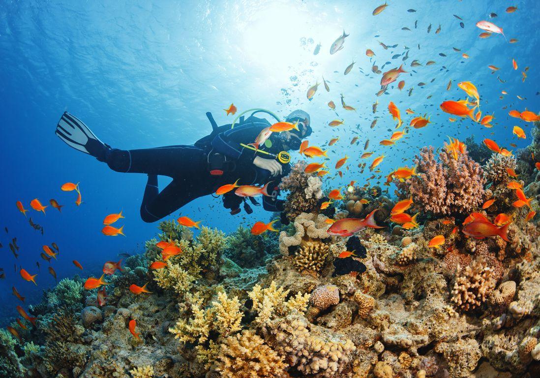 Plongée sous marine : les meilleurs spots où observer la faune aquatique