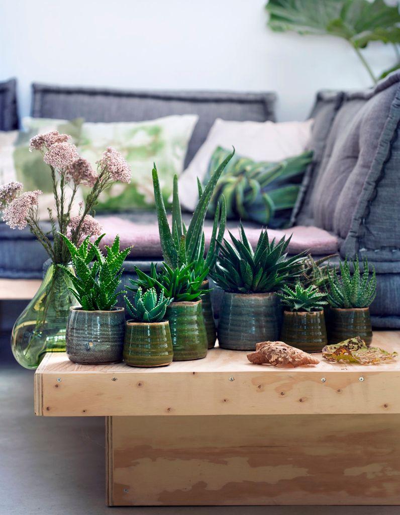 6 plantes increvables pour celles qui n ont vraiment pas la main verte elle d coration. Black Bedroom Furniture Sets. Home Design Ideas