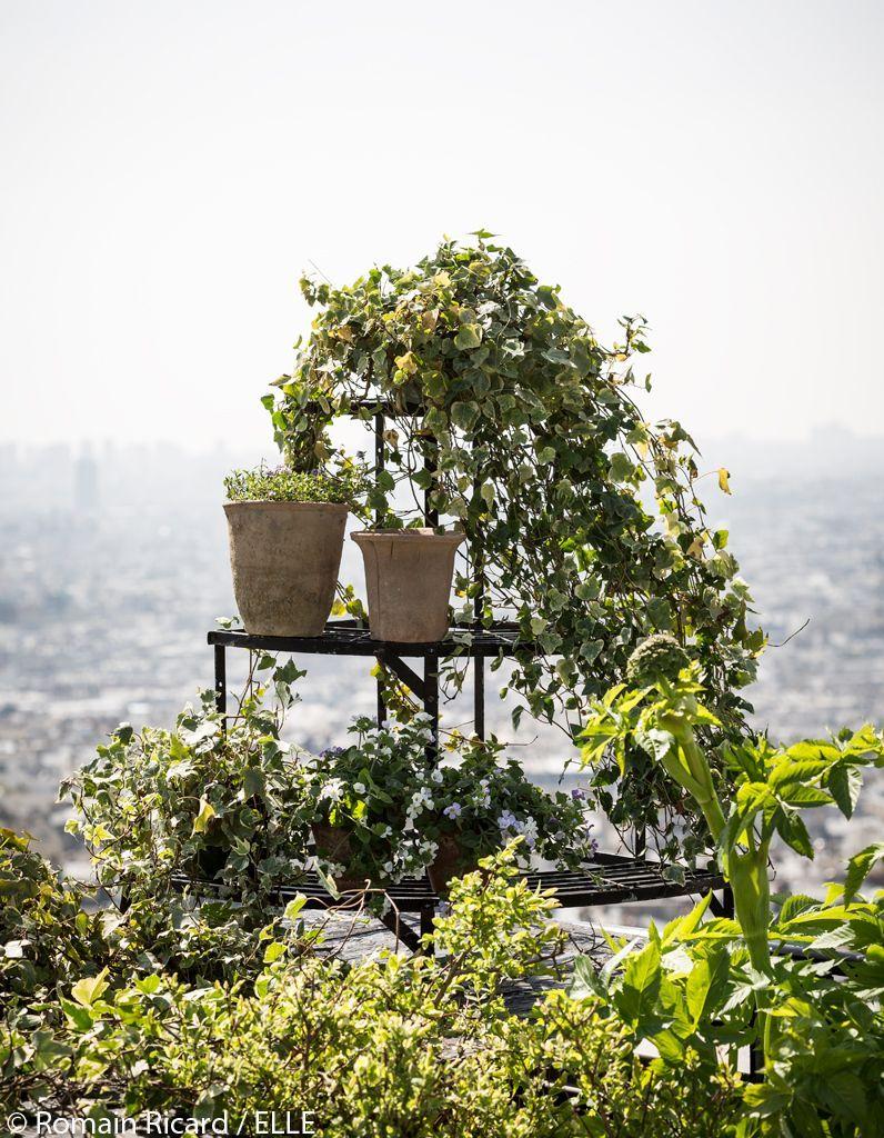 composition-de-plantes-jardin