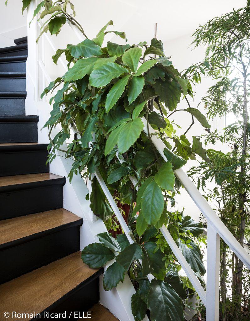 escalier-interieur-vegetalise