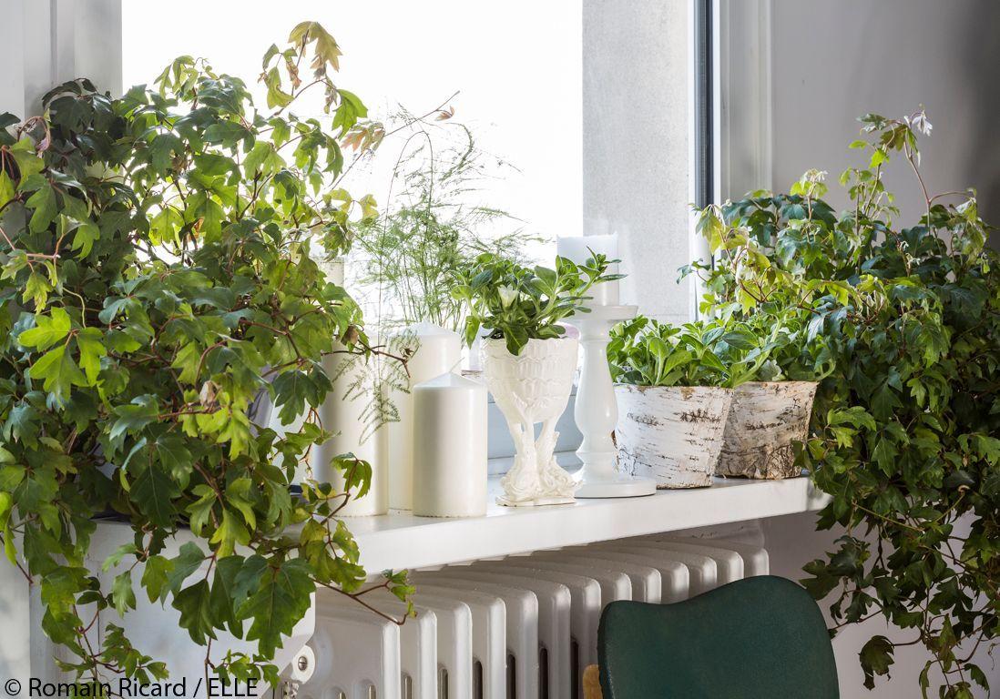 mini-serre-jardinage