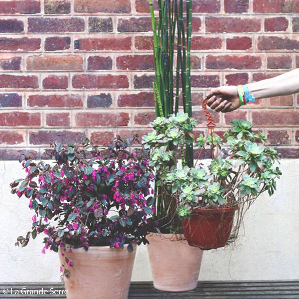 plantes-vertes-en-pot