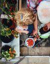 Cultiver un potager sur mon balcon, c'est facile
