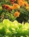 Les 12 règles d'or de la permaculture