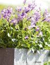 Une jardinière fleurie pour l'été