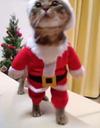 Prêt-à-liker : Découvrez Ginnan, le chat déguisé en père Noël !