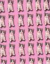 Rêver de chat : notre interprétation