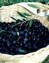 L'olive : un aliment santé