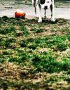 Plusieurs enfants attaqués par un pitbull au Havre