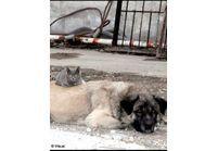 Sibérie : une fillette élevée par des chiens et des chats !