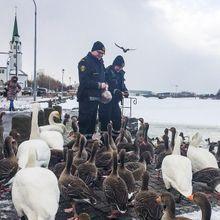 #PrêtàLiker : Vous Allez Adorer Les Policiers De Re...