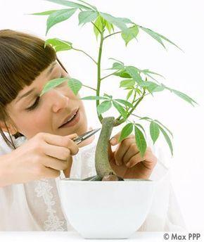 Connaissez-vous le B.A-BA en jardinage ?