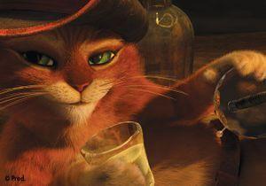 [VIDEO] « Le Chat Potté » : Découvrez Un Extrait En...