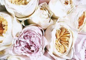 Shopping senteurs : bouquets de printemps
