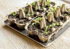 8 conseils pour un jardin zéro déchet