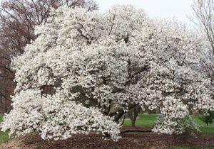 Quel arbre de petite taille pour mon jardin ?