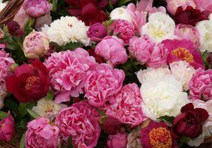 Un e-fleuriste vous aide à choisir vos plantes