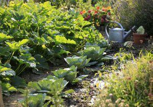 Potager ou jardin fleuri : comment aménager un talus ?