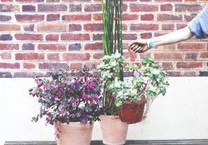 Nouveau : une jeune société livre et entretient mes plantes !