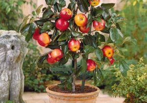Comment planter les arbres fruitiers ?
