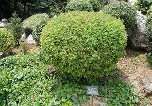 Courson : les 10 arbres et arbustes de l'année