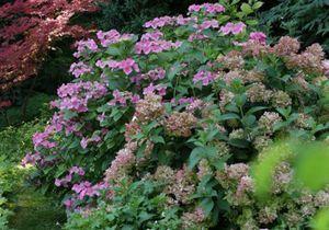 De belles fleurs dans votre massif fleuri géant