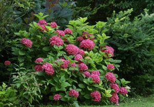 Des fleurs colorées pour massif estival