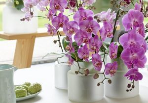 Zoom sur une plante résolument élégante : l'Orchidée