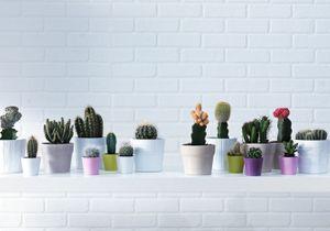 Pourquoi le cactus est-il si tendance ?