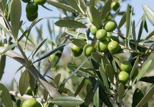 Les plantes typiques du sud de la France